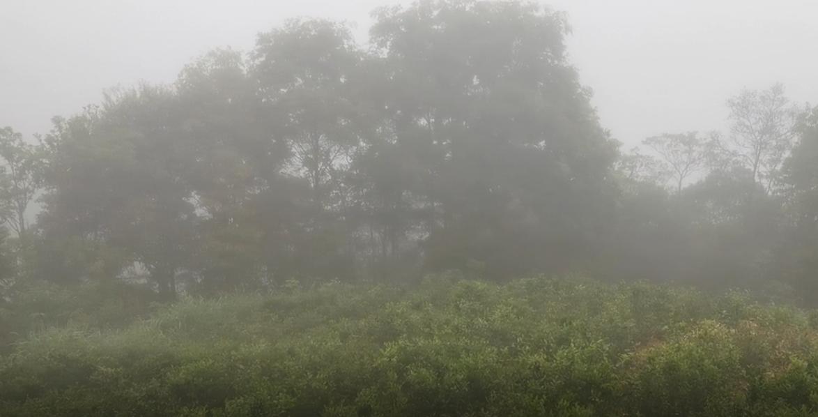 走近洋西坑系列:关爷顶原生态高山茶园美景