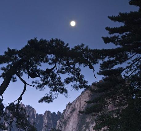 明月松间照