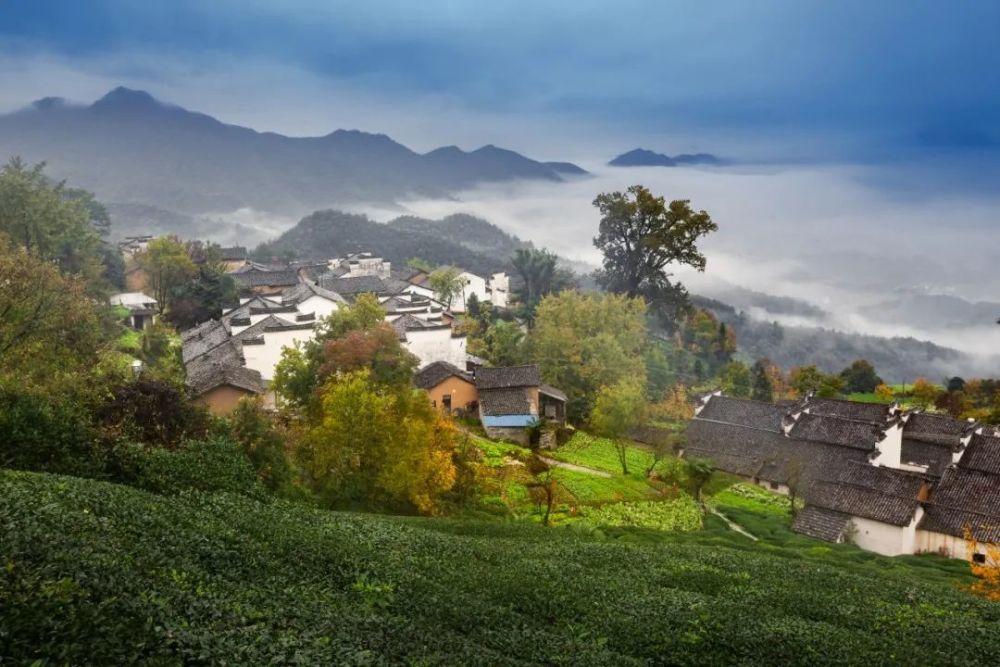 """安徽的这款茶,何以称为炒青绿茶的""""鼻祖""""?"""